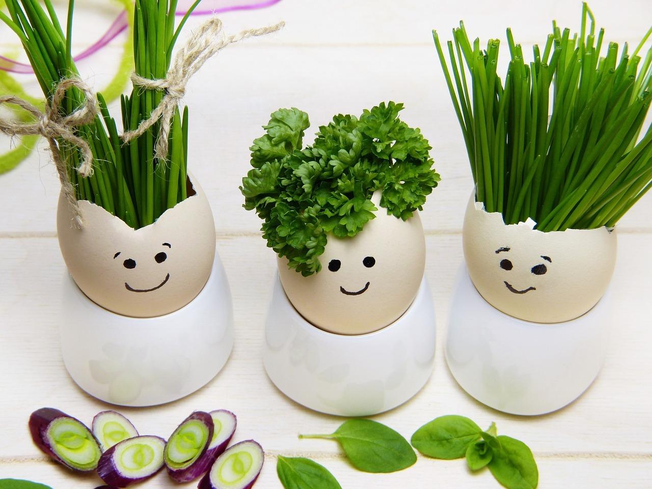 Cascas de ovos com ervas aromáticas